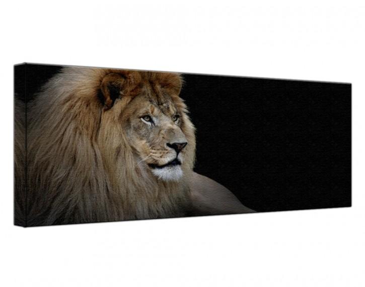 Leinwandbild Löwe Lang