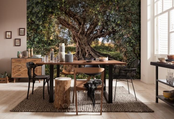 Fototapete Olive Tree
