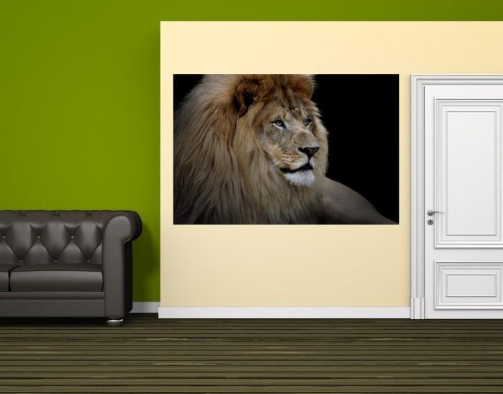 Selbstklebendes Wandbild Löwe