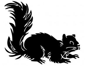 Autoaufkleber Eichhörnchen