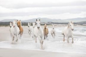 Fototapete Pferde am Strand