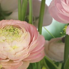 Fototapete Gentle Rosé